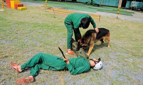 Trường huấn luyện chó nghiệp vụ tốt nhất tại Tphcm