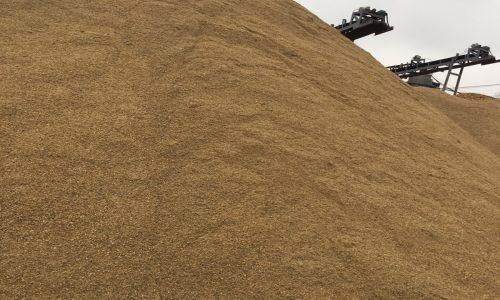 Giá cát vàng mới nhất năm 2021